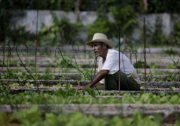 cuba organic agriculture