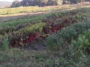organic farming methods