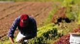 organic farming techniques
