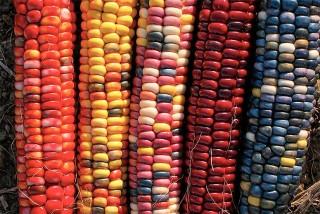 organic agriculture, organic farming
