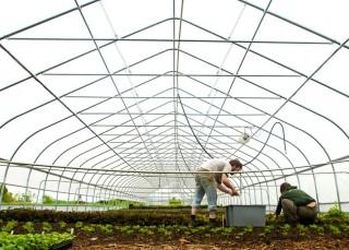 organic agriculture profit, organic industry profit