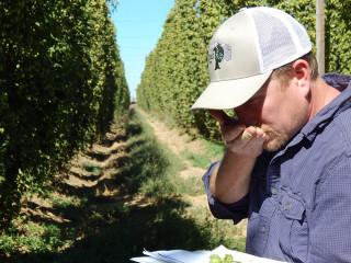 organic hops, organic farming, organic agriculture