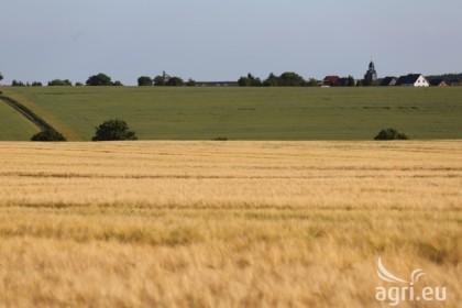 organic farm land, hectares