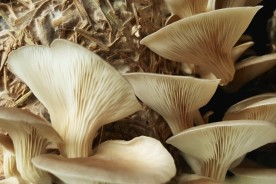 Mushroom-Cultivation