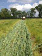 organic farmers issues