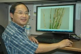 organic rice improve production