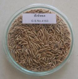 organic Sang Yod rice