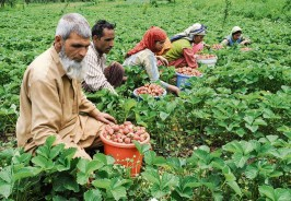 organic-farmer-inovating