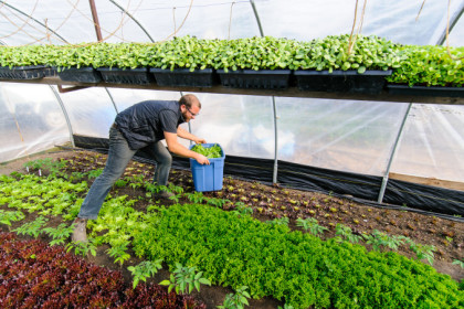 urban organic farmer
