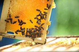 cuba organic honey