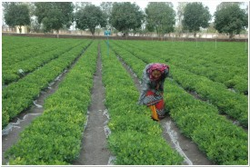 first organic farming university