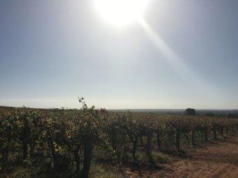 organic wine sa