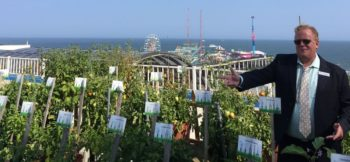 organic farming on a roof