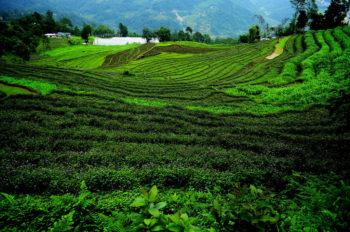 sikkim fully organic