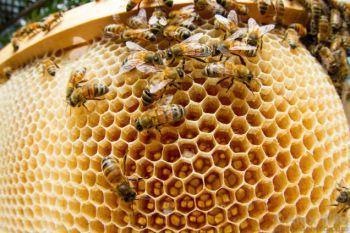 neonicotinoids and bees