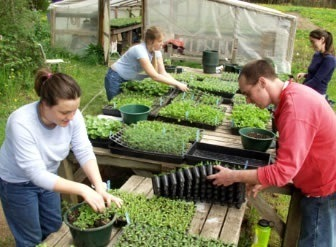 Advantages and Disadvantages Organic Farming