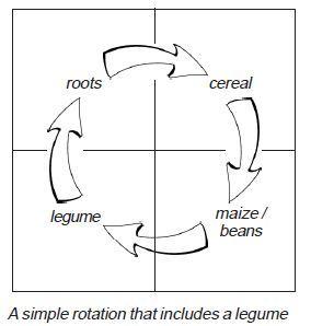Organic Crop Rotations