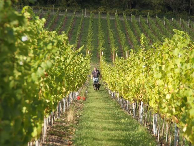 Wine growers are toasting biodynamic methods