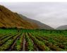 organic producers, farmers