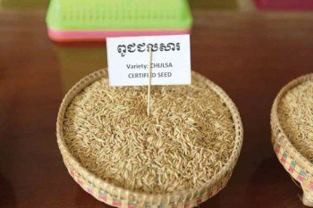 Cambodian farmers, growing high-quality aromatic organic rice