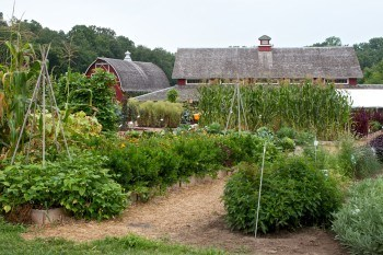 organic seed saving