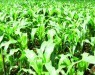 organic crop management