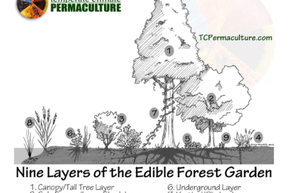food forest, organic agriculture