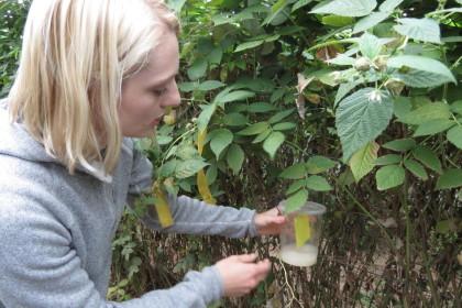 organic farming, organic berries
