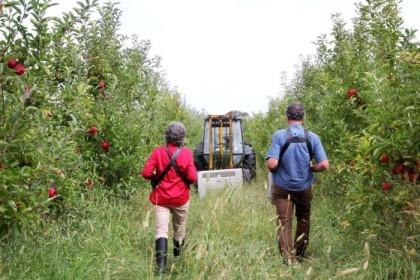 organic apple growers
