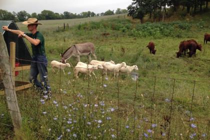 organic small-scale farmers