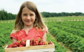 virtual reality meets organic farming
