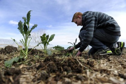 LAKEWOOD, CO - MARCH 9: Noah  Luce, 17, plants kale at Bean Acres Farm in Lakewood, Colorado on March 9, 2016. For the past year, The Squeaky Bean Farm + Table restaurant in Lower Downtown Denver has worked in collaboration with Warren Tech High School in Lakewood to operate a farm called Bean Acres. The Squeaky Bean partner/chef/farmer Josh Olsen manages the three acres of organic farmland, which includes two 6,000-square-foot year-round greenhouses, working with Warren Tech staff and students. (Photo by Seth McConnell/The Denver Post)