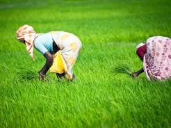 indias organic market to trebble
