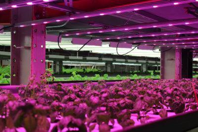 chicago organic vertical farm