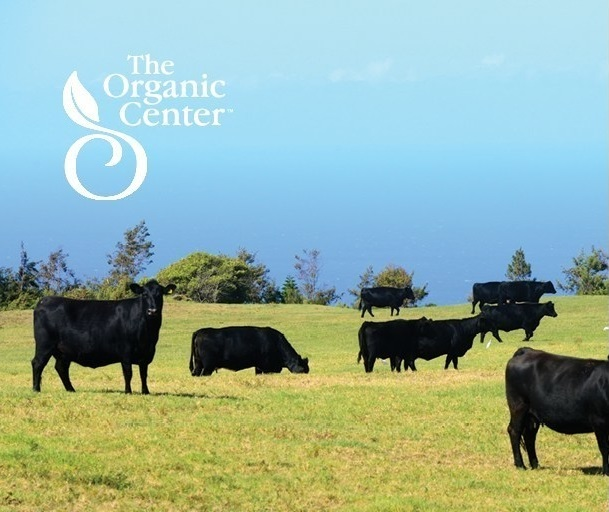 Organic practices help reduce exposure to antibiotic-resistant bacteria