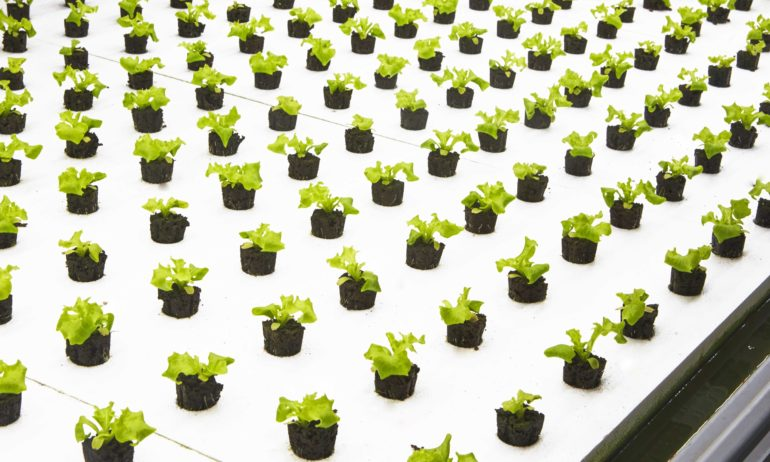 "New Indoor Farming Company Is Growing ""Post-Organic"" Produce"