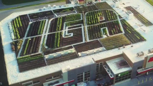 Grocery Store Puts a 25,000 Square Foot Organic Garden on Its Roof