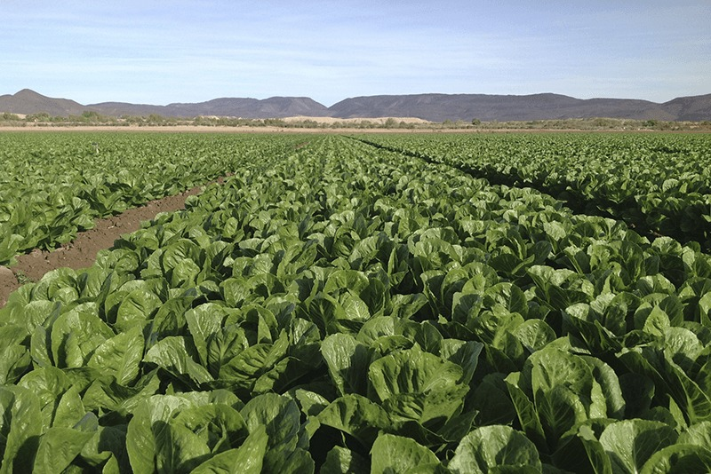 Growers expand organic vegetable product lines