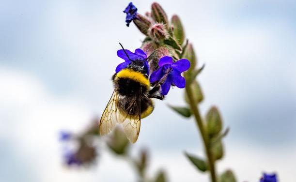 Organic farming methods favour pollinators